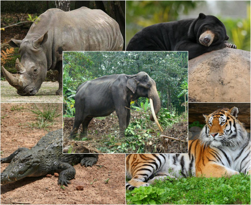 endangered species and extinction The endangered species act is the world's gold standard for conservation and protection of animals, said daniel m ashe, now president and chief executive of the association of zoos and.