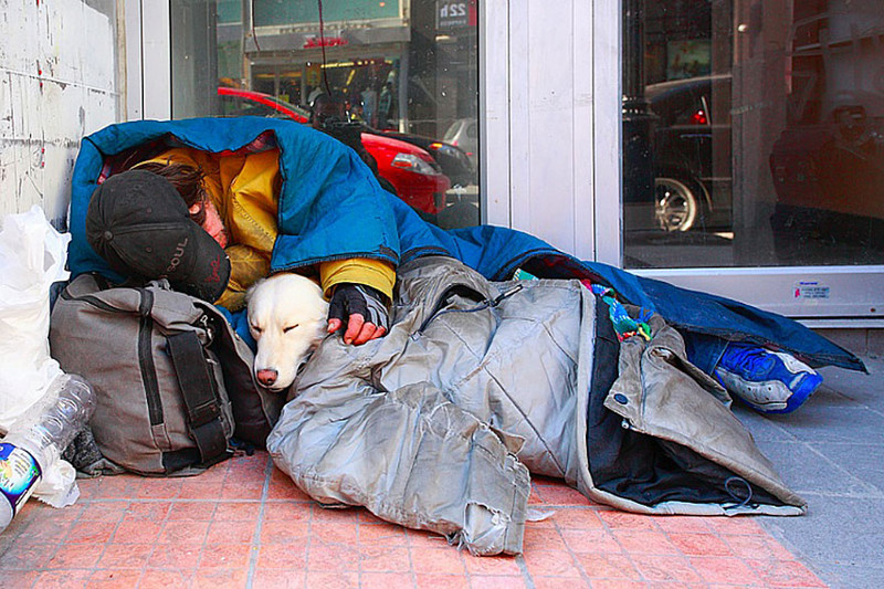an overview of the life of homeless people and homeless dogs