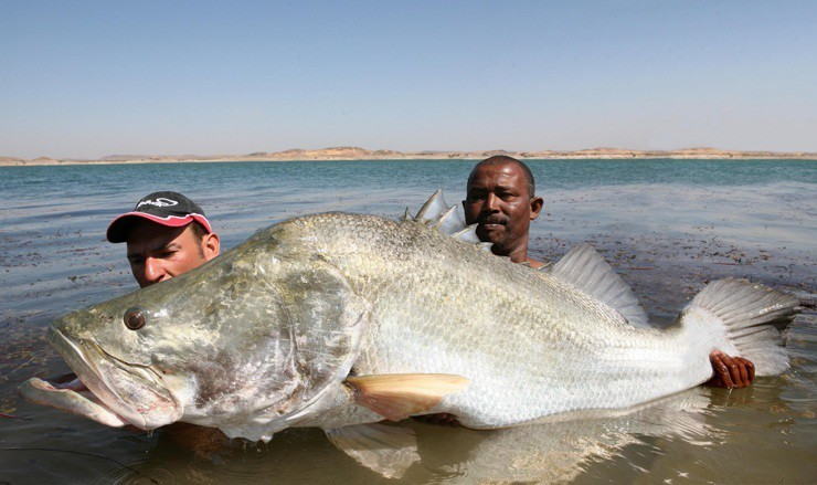 Giant freshwater fish species